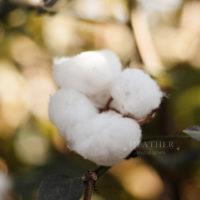 Cotton Field Portrait Sessions
